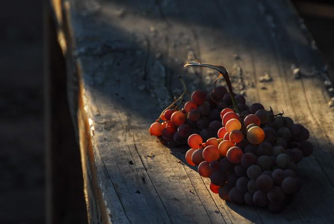 Fruto del valle de Lolol, Chile