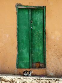 Gato en Mindelo Cabo Verde