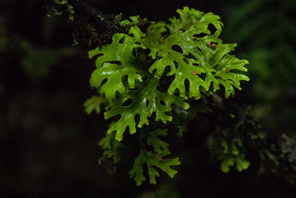 Vegetación en el bosque