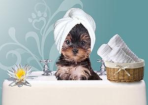 dog-grooming-3_1_orig.jpg