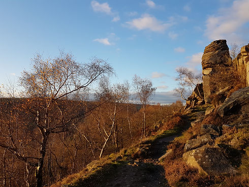 Trees and Rocks at Sunset