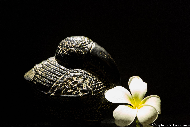 Oiseau d'Asie