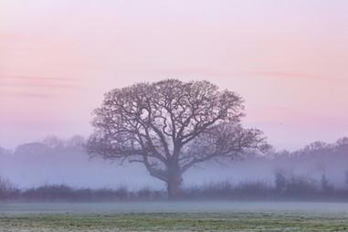 Winter Sunrise at Haysden - 4108.jpg