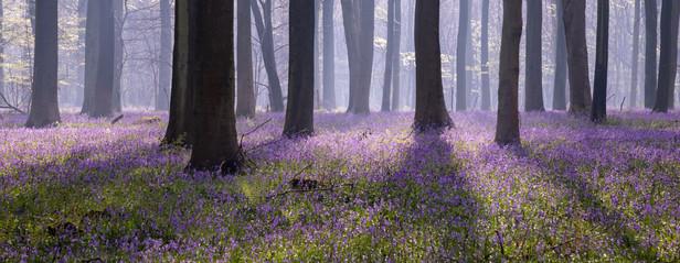 Purple Carpet - 0201.jpg