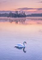 Swan Lake-2.jpg