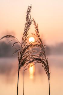 Sunrise at Haysden - 5309.jpg