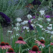 cone flowers and daisys