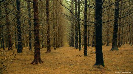 Le_temps_des_forêts_4.jpg