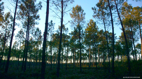 Le_temps_des_forêts_2.jpg