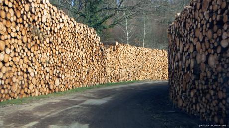 Le_temps_des_forêts_6.jpg