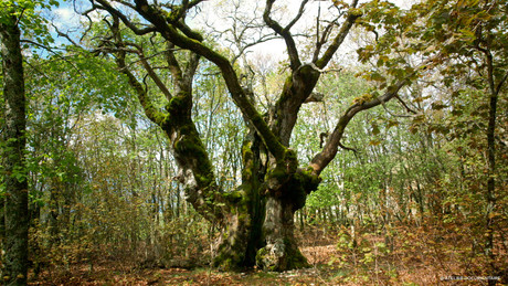 Le_temps_des_forêts_1.jpg