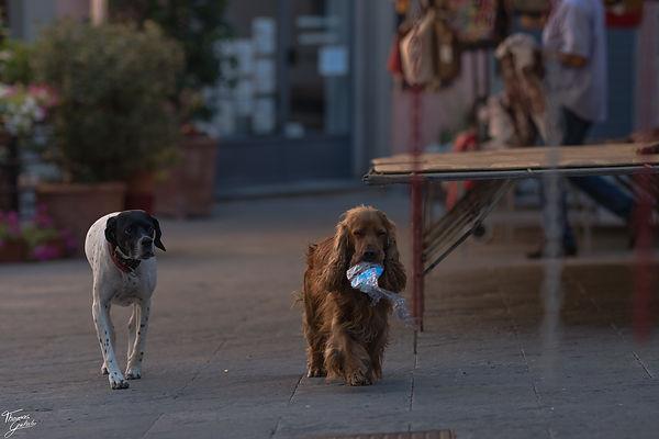 2 Dogs in the streets of Foiano della chinana