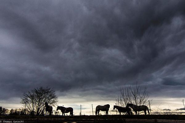 Pferde vor Wolken Buchwald Ranch