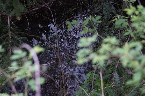 Quelle sprudelt zwischen den Bäumen