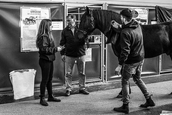 Pferd Friedrichshafe Urgese