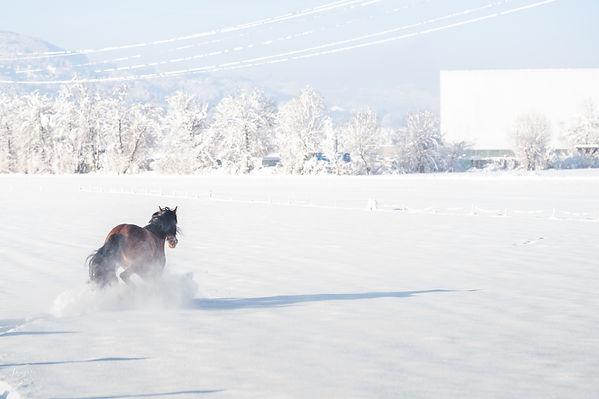 Mago, spnish horse