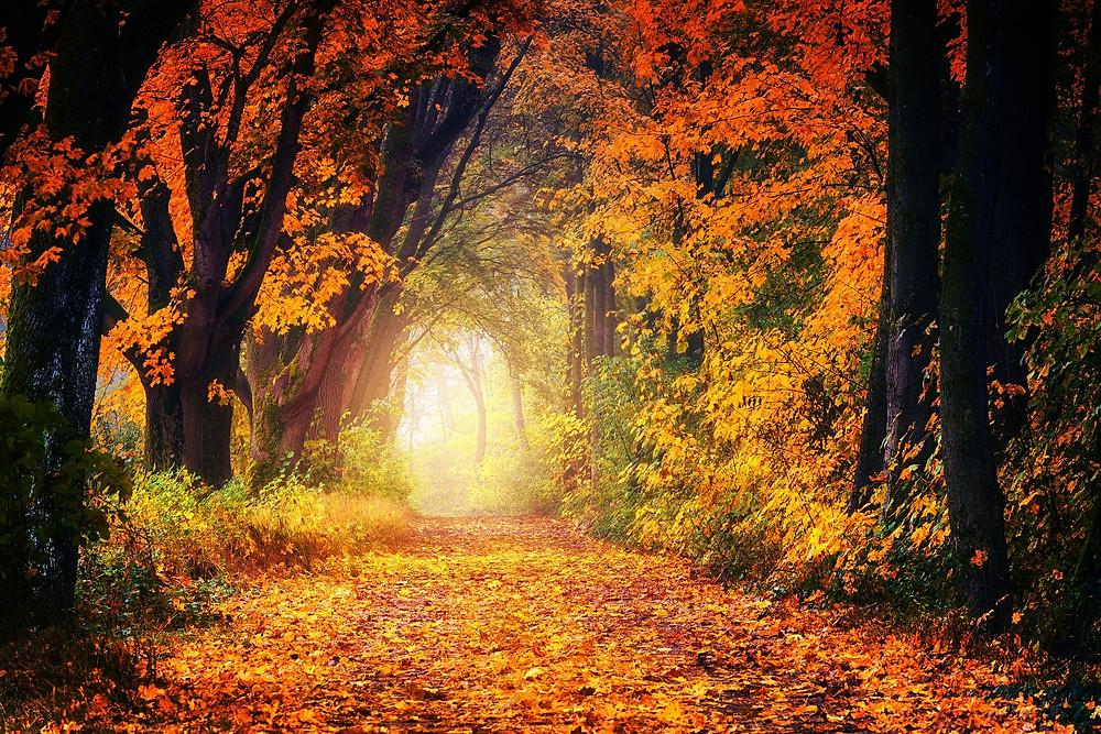 Herbst Tagundnachtgleiche - Die Natur strahlt in den Farben der Lebenskraft