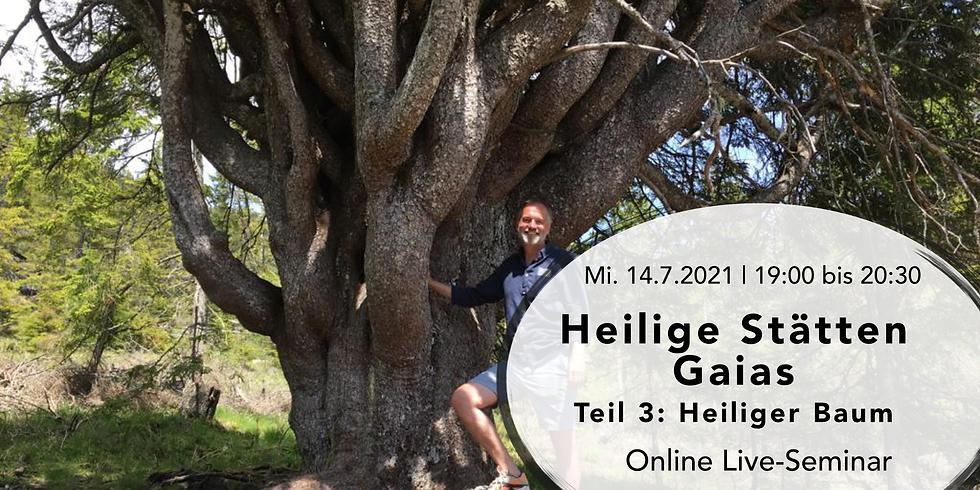 Heilige Stätten Gaias - Teil 3: Heiliger Baum