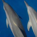 sortie jerome 27Moorea Deep Blue Whale Baleine dolphin dauphin0709 - 0075.JPG