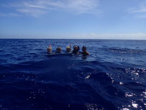 Whale Baleine dolphin dauphin
