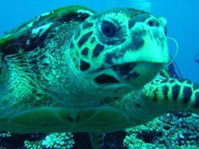 Moorea snorkeling