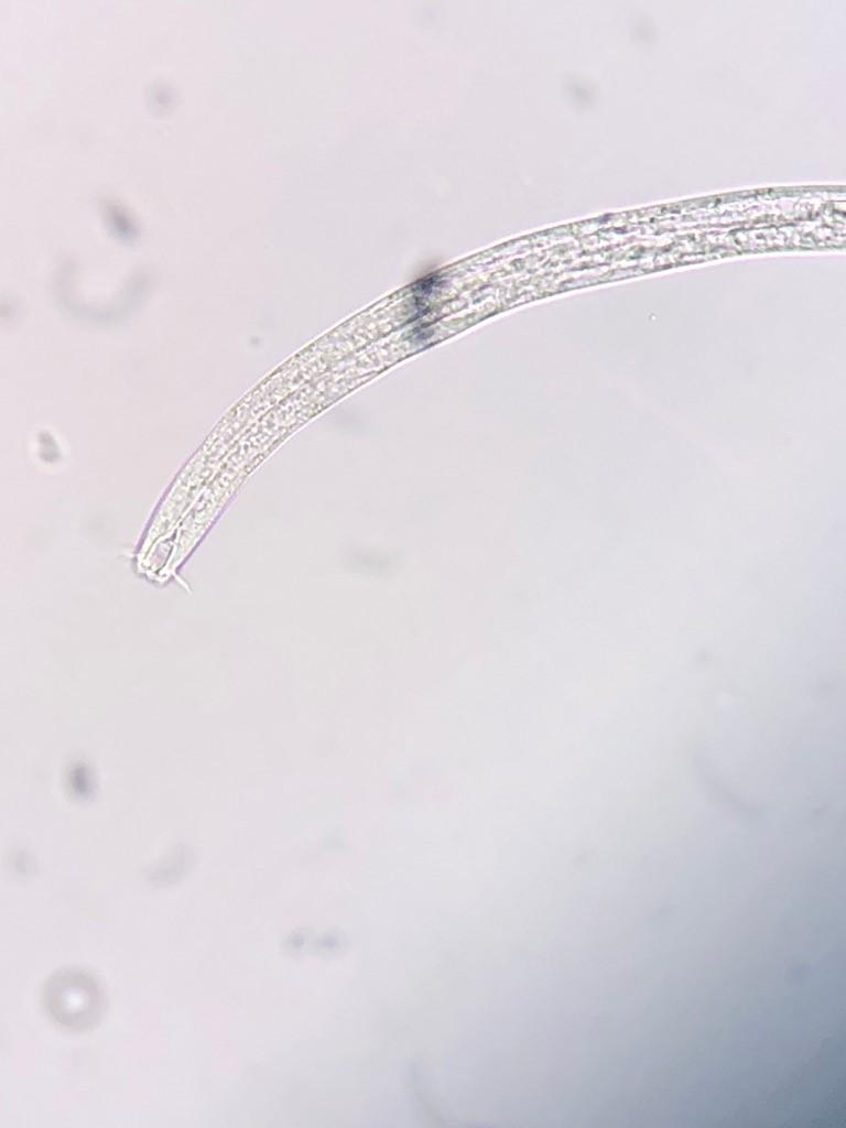 microscope1.jpg