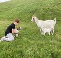 Boer goats.JPG