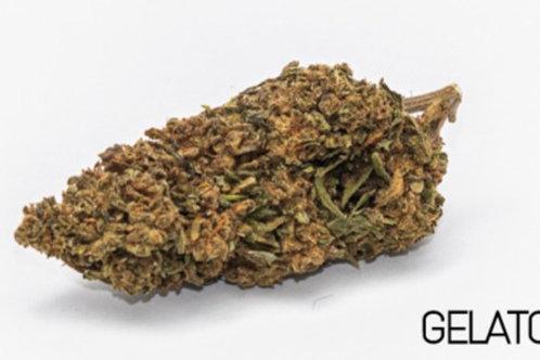 Gelato - (Premium Hybrid)
