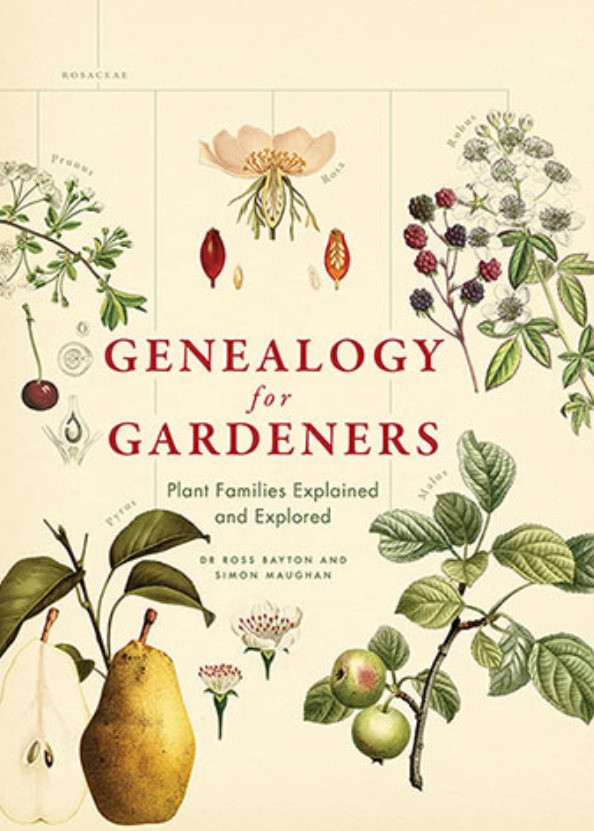 Plant genealogy from https://www.allenandunwin.com/browse/books/general-books/lifestyle/Genealogy-for-Gardeners-Simon-Maughan-9781760630508