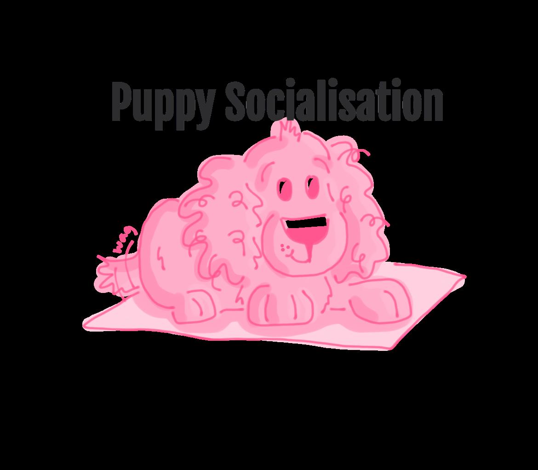 Puppy Socialisation Workshop 10/8/21