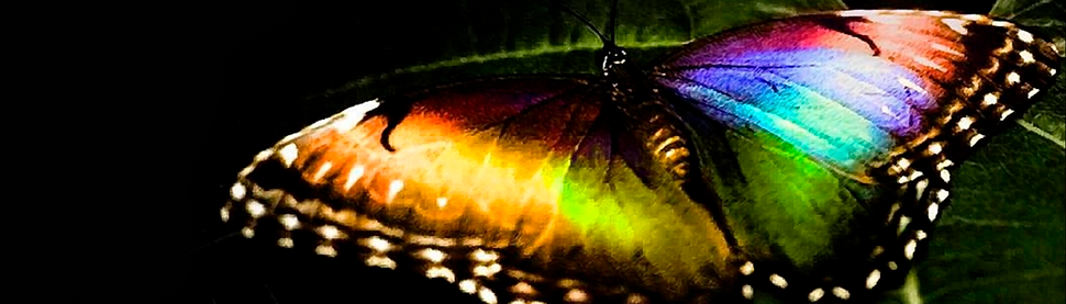rainbow butterfly_edited.png