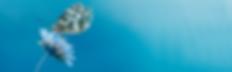 SYMPATHY WEBSITE HEADER.png