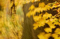 Verdraaide Herfst