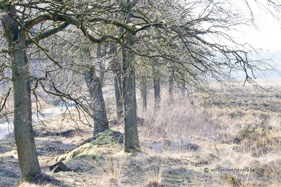 Park de Hoge Veluwe