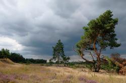 Natuur bij Radio Kootwijk