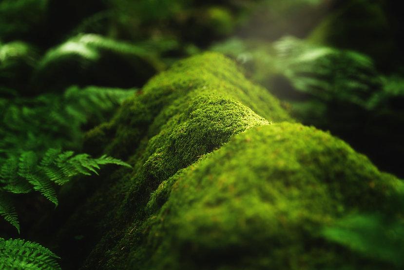 closeup-shot-moss-plants-growing-tree-br