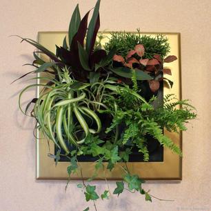 Plantastic Living Paintings