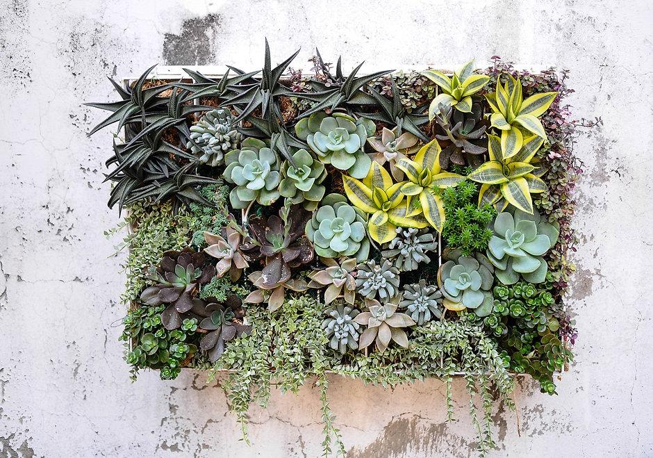 Succulents  wall.jpg
