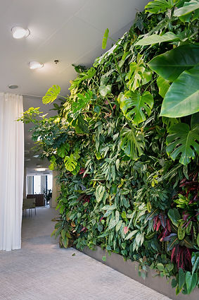 Living green wall with flowers and plant