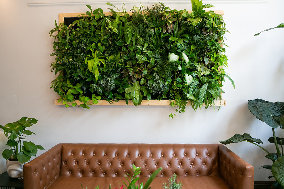 Floating plants on wall over brown leath