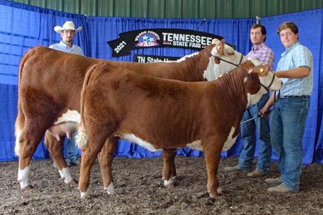 TN State Fair 2021_Chmp cow-calf.jpg
