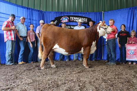 TN State Fair 2021_Chmp heifer.jpg