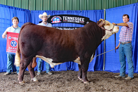 TN State Fair 2021_Res bull.jpg