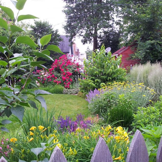 Backyard in Summer - Shorewood