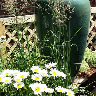 Grasses, Becky Shasta Daisy, and Stachys