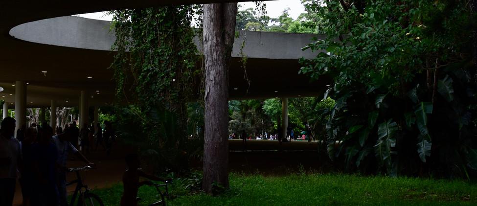 rodrigo_azevedo_parque_tarde.jpg