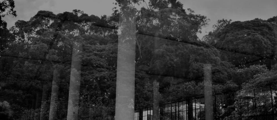 rodrigo_azevedo_parque_reflexo.jpg