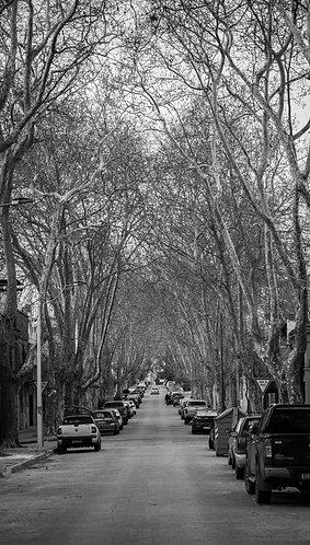 Montevideo XIII