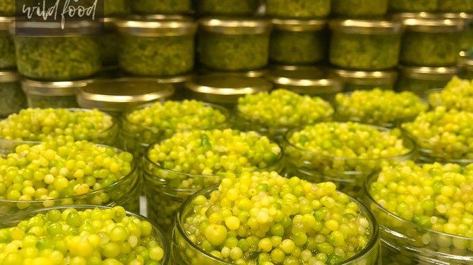 Bello Wild Food Allium 'Caviar' 250g