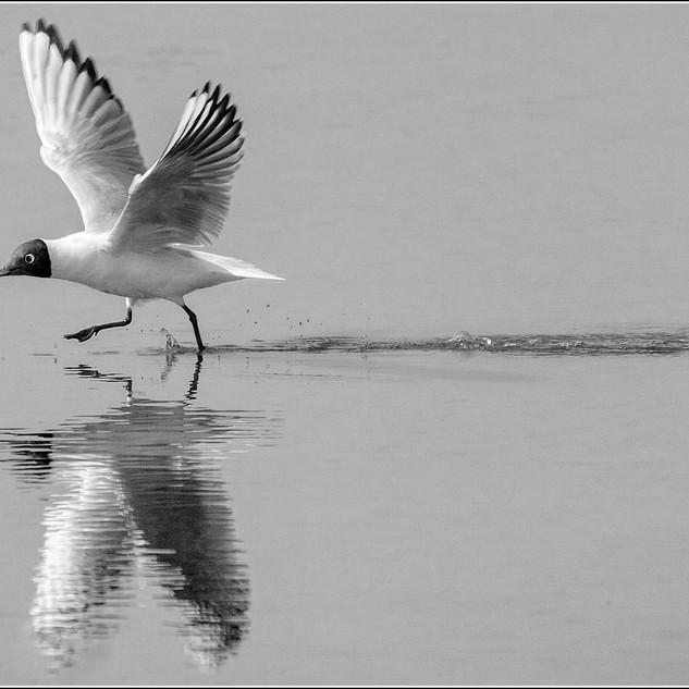 M7. Water Wings